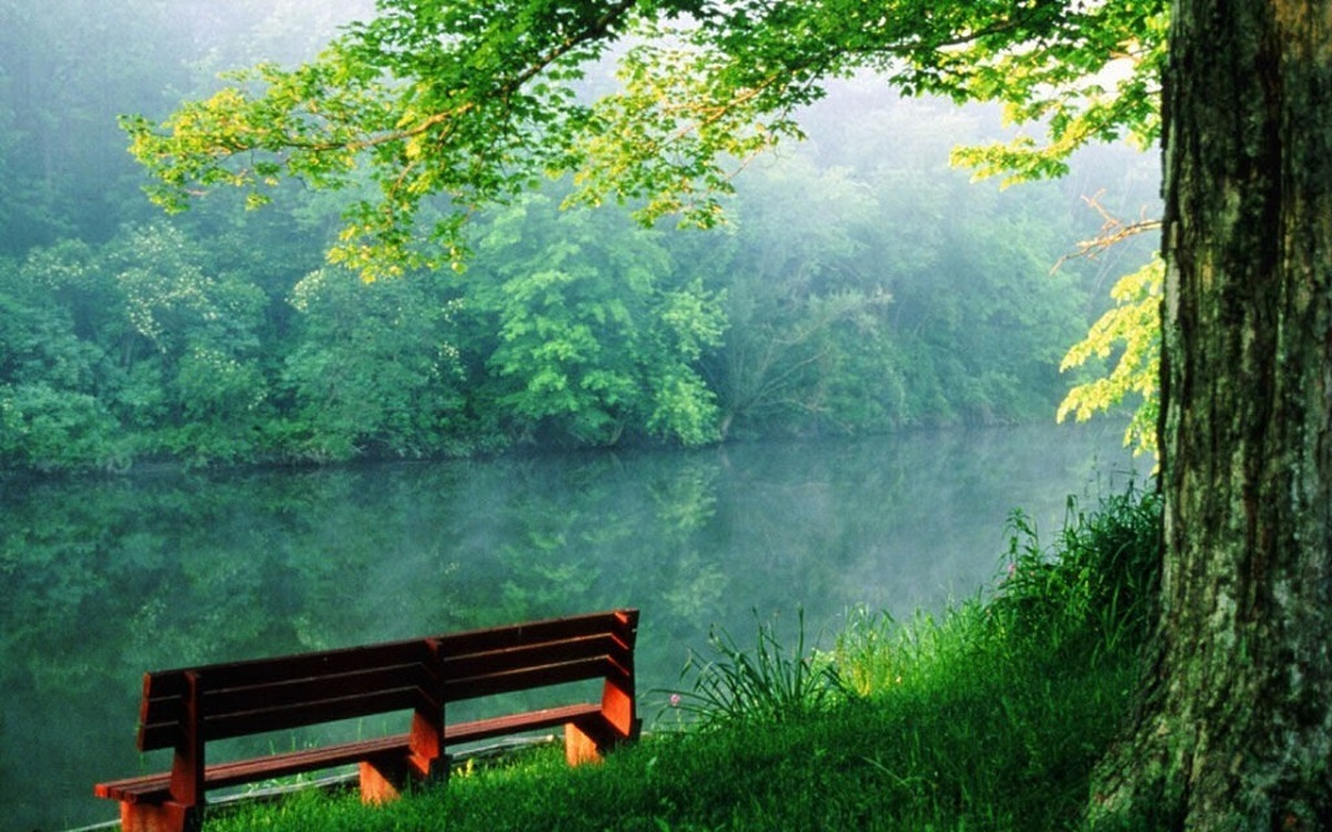 Bench overlooking lake with trees